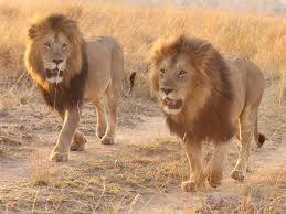 Malawi Fights Against Wildlife Crimes