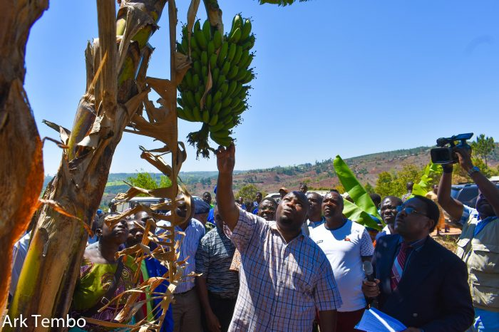 Govt Concerned With Tea Prices