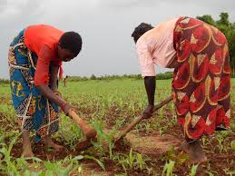 Ministry Urges Farmers to Plant With First Rains