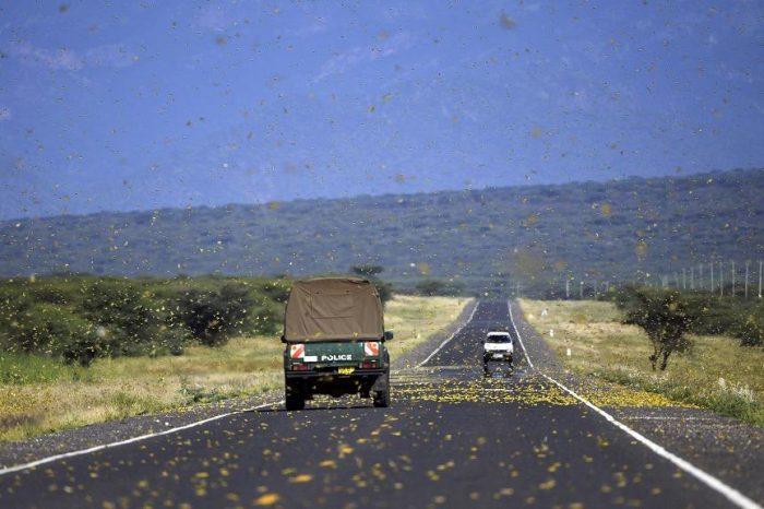 Locusts Reach Uganda, Tanzania