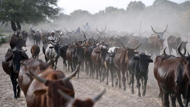 Chad 'Repaying $100 M Debt to Angola with Cattle'