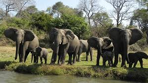 Kasungu National Park Elephant Population Increases By 100%