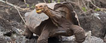 What Can We Learn From the Tortoise?